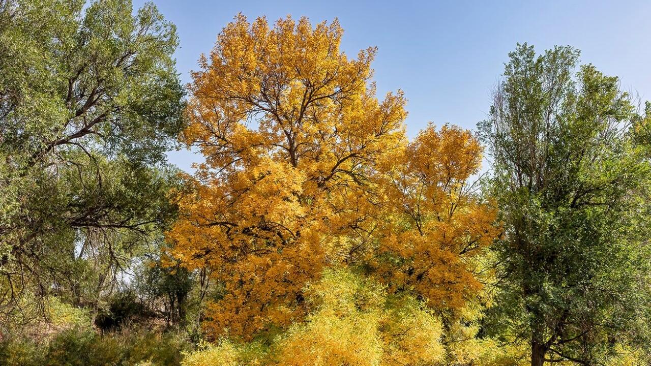 Fountain Creek Nature Center Larry Marr.jpg