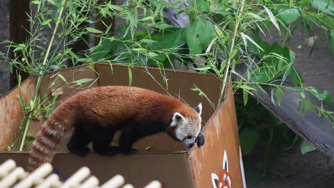 Panda Birthday 4.jpg