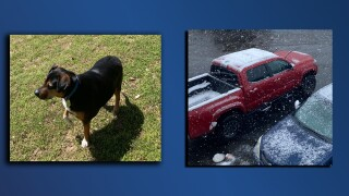 Wheat Ridge car stolen with dog inside.jpg