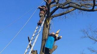 man stuck in tree.jpg