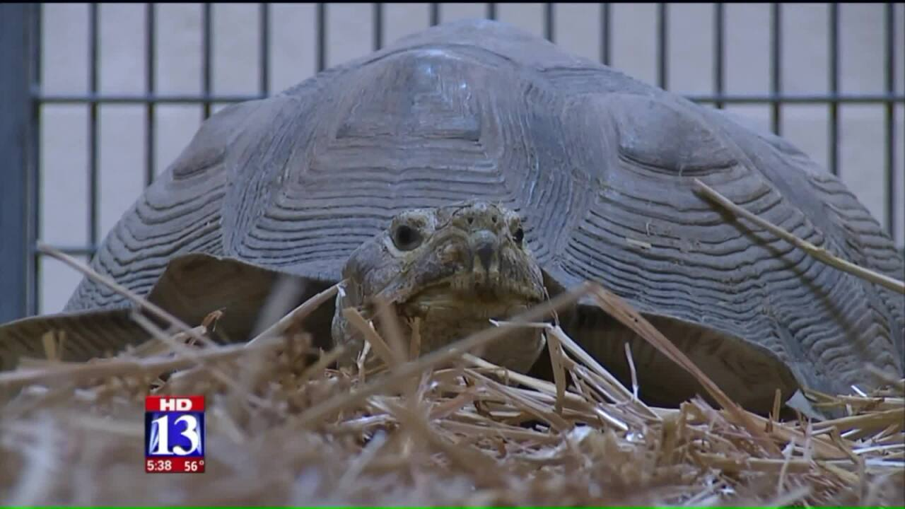 Salt Lake Co. Animal Services seize 86 reptiles after rescuer admitted to hospital