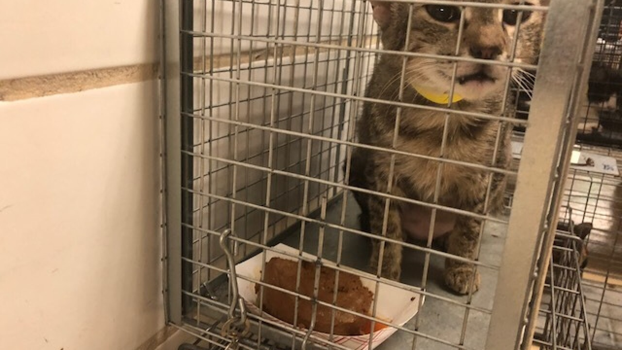 More than 100 cats taken from rescue group