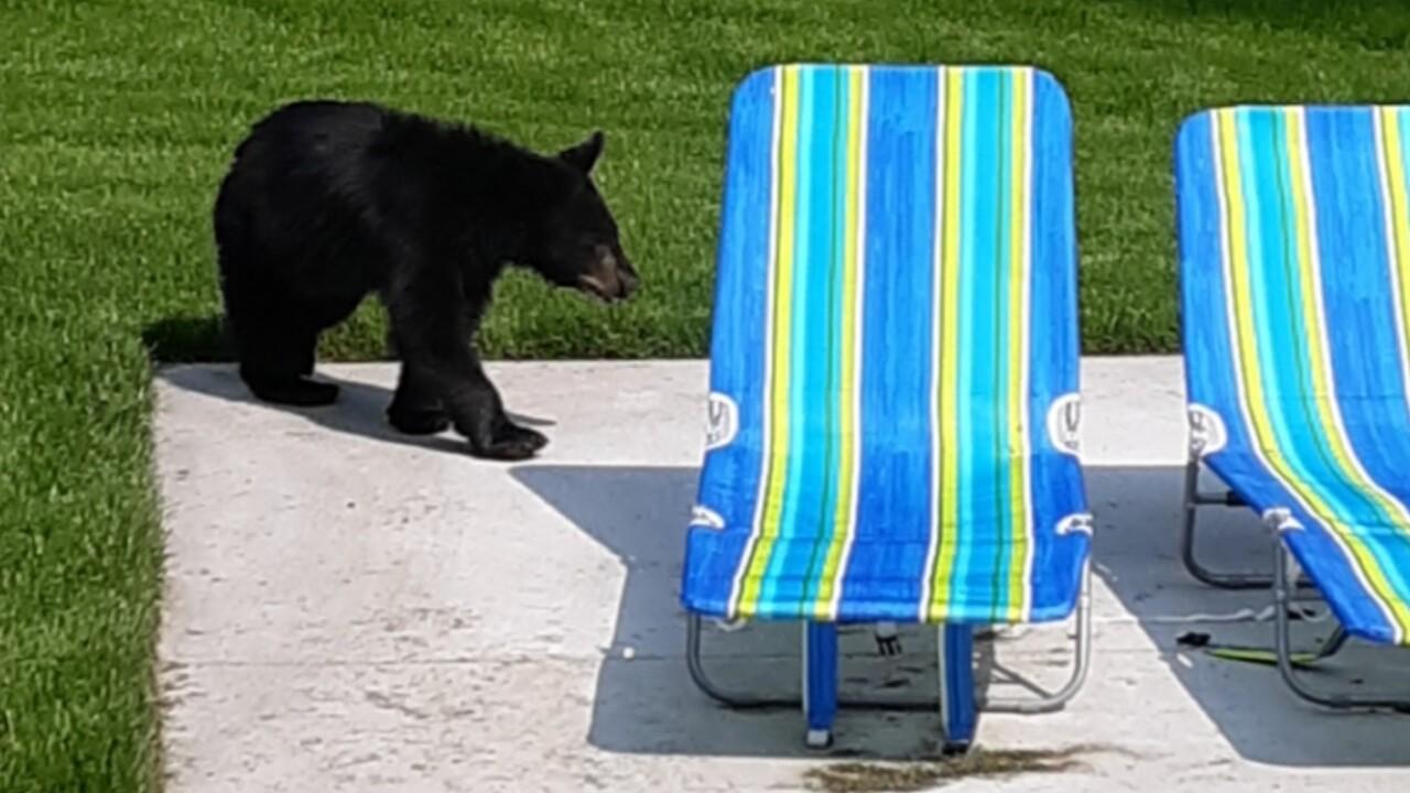 whitefish bears6.jpg