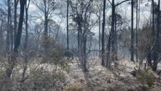 The aftermath of a brush fire near the Spanish Lakes community in Port St. Lucie on May 10, 2021.jpg