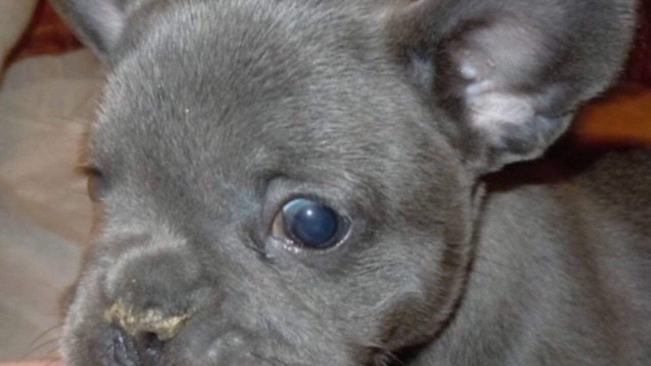 South Euclid Woman Has A Warning About Puppy Websites