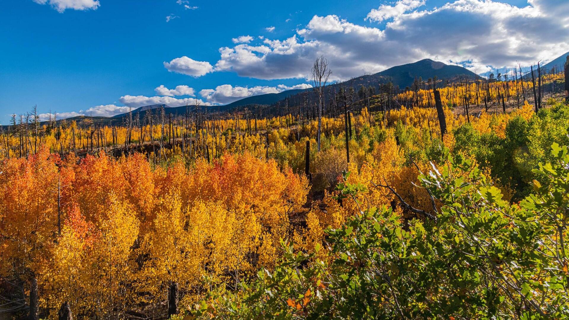 1Cloverdale Basin Steve Shugart 1.jpg