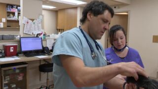 Great Falls veterinarian offers Thanksgiving safety tips for pets