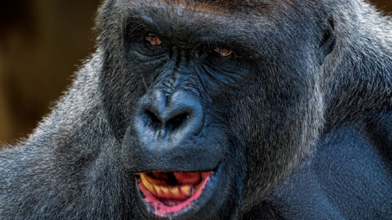 Boys dupe Google into renaming road for Harambe
