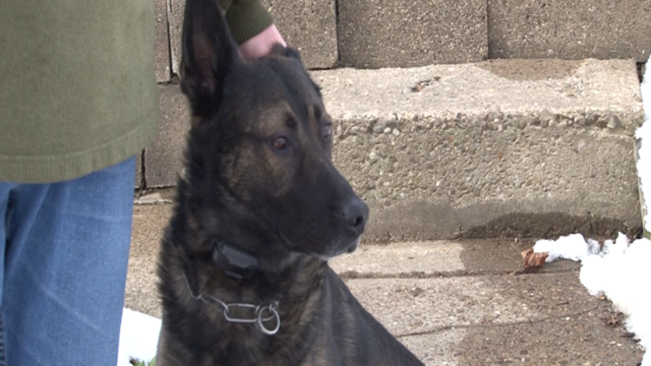 Retired Ohio officer can purchase K9 companion