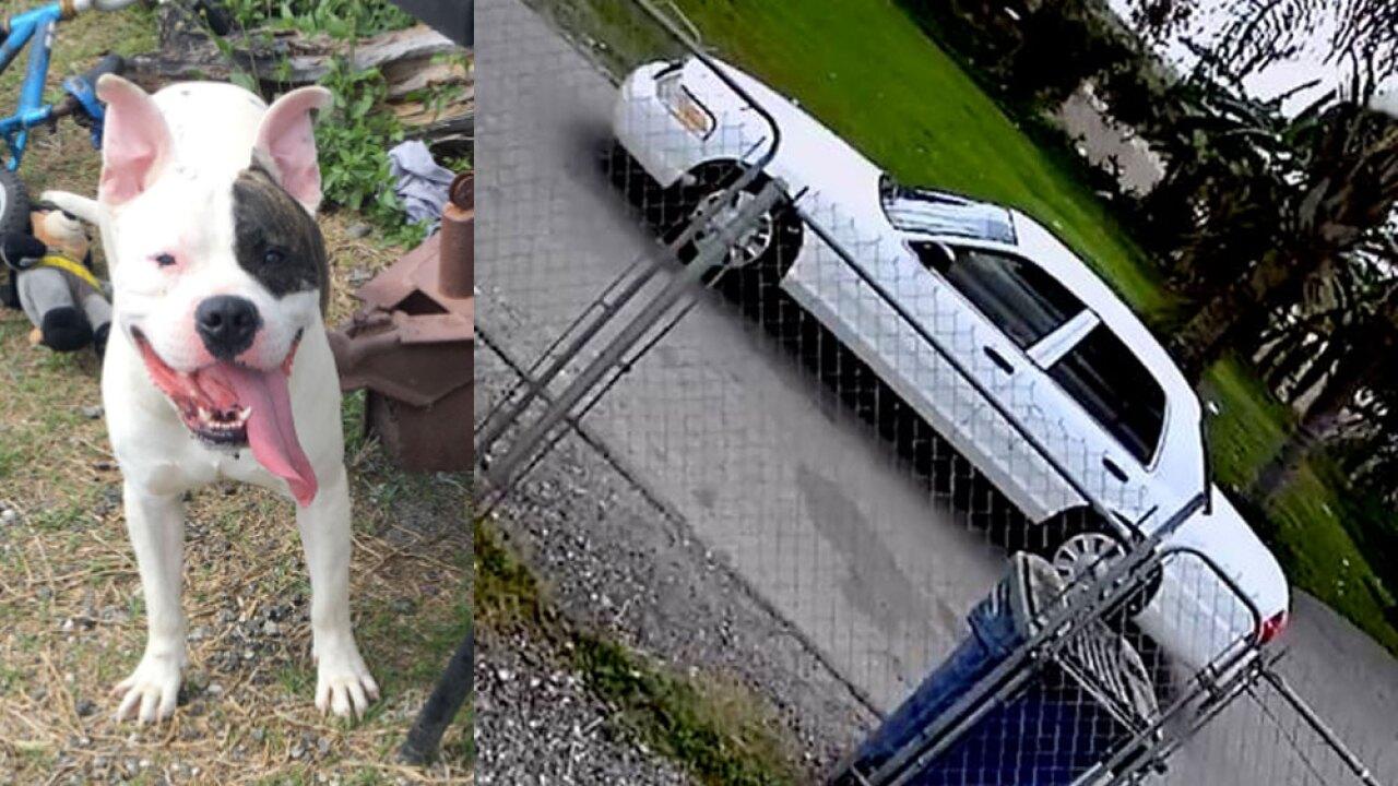 wptv-dog-attack-mobile-home-park-.jpg