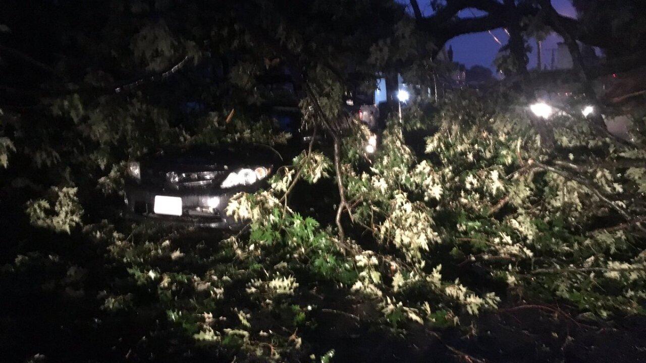 Vehicles hit by downed tree in Ocean View as Hurricane Dorian impactsregion