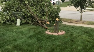Downed tree from wind.jpg