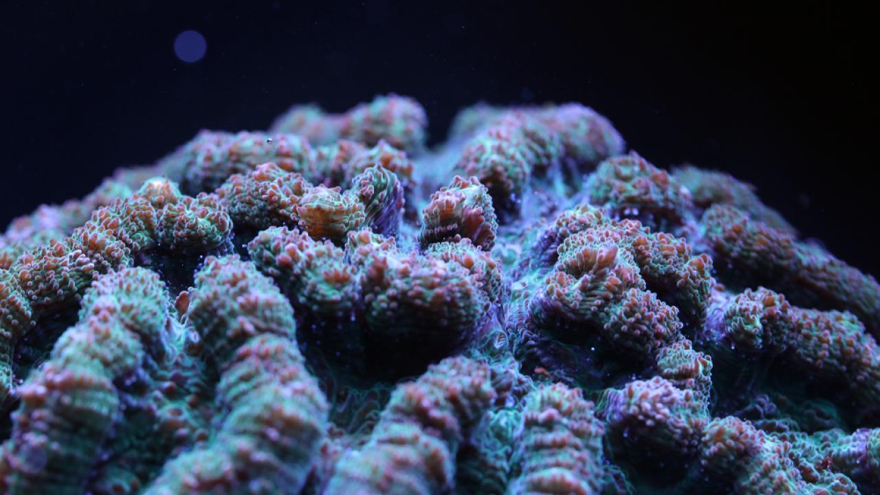 cactus-coral.png