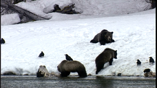 Grizzly Bear Advisory Council holds inaugural meeting
