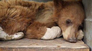recovering-bear1.jpeg