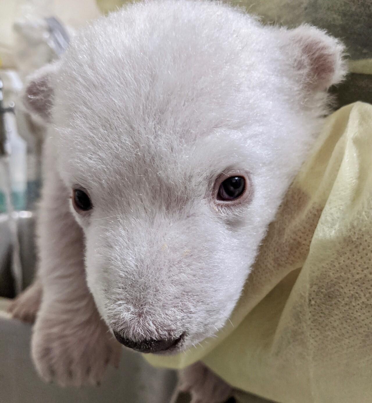 Polar Bear Cub 1.jpeg