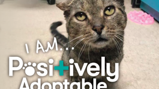 Positively Adoptable