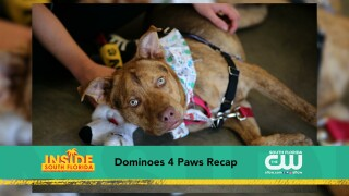 Paws & Claws: Paws 4 You Event Raises Over$20,000