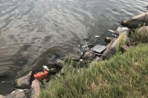 Dead fish at Sloan Lake_Aug. 19 2020 2