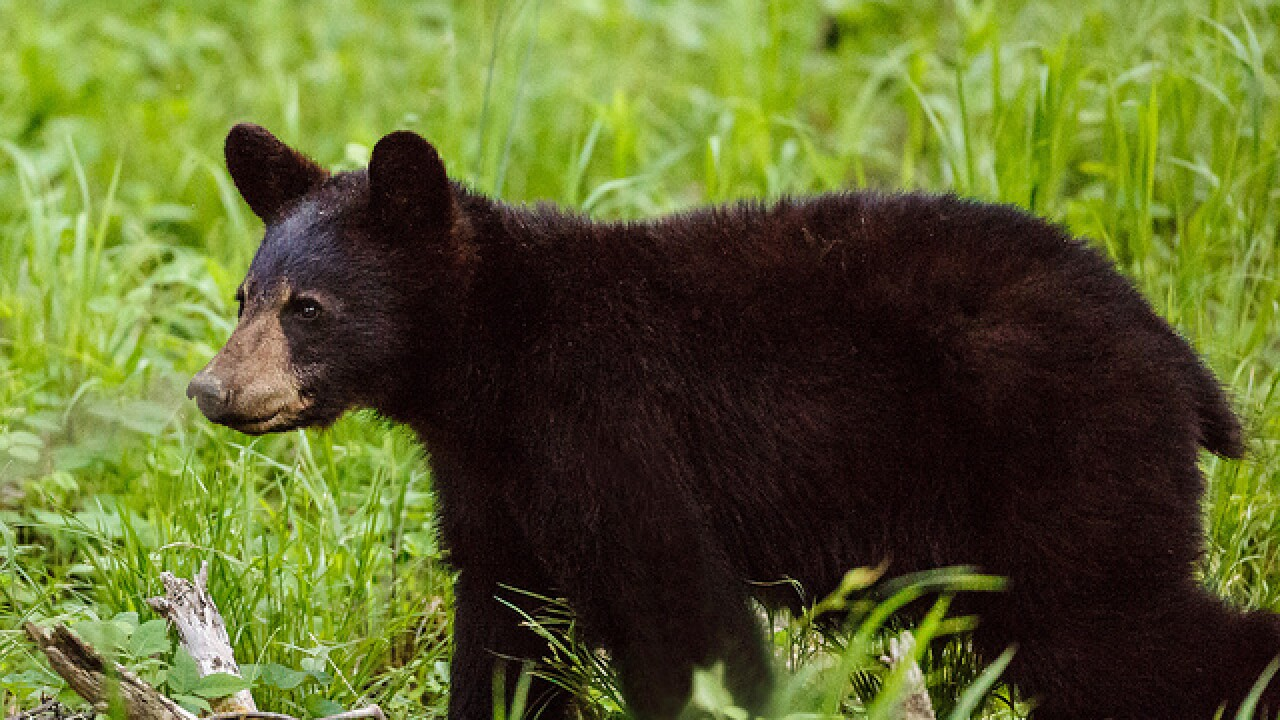 Arrest warrant issued for man who shot, killed bear in Mayes County