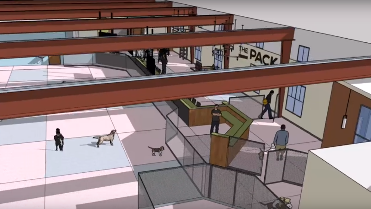 the pack indoor dog park.PNG