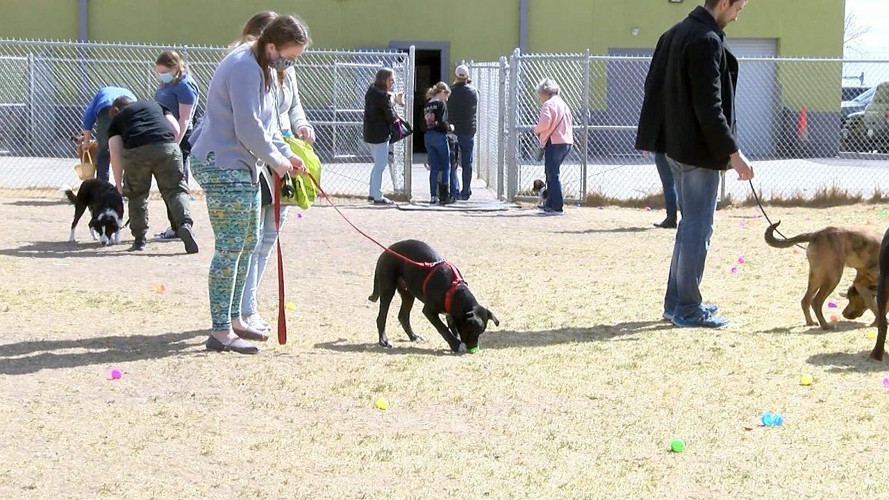 Easter Egg Hunt for Dogs at Fetch