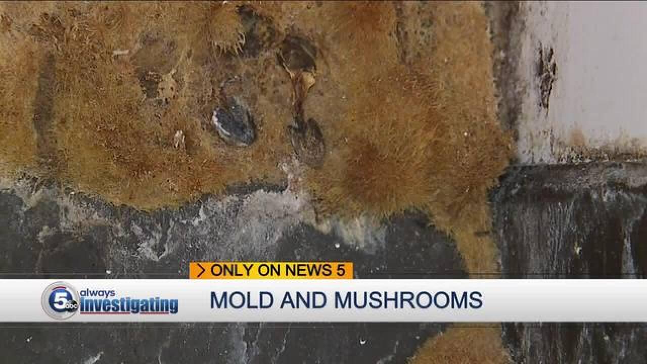 Mold, mushrooms plague east side apartment unit