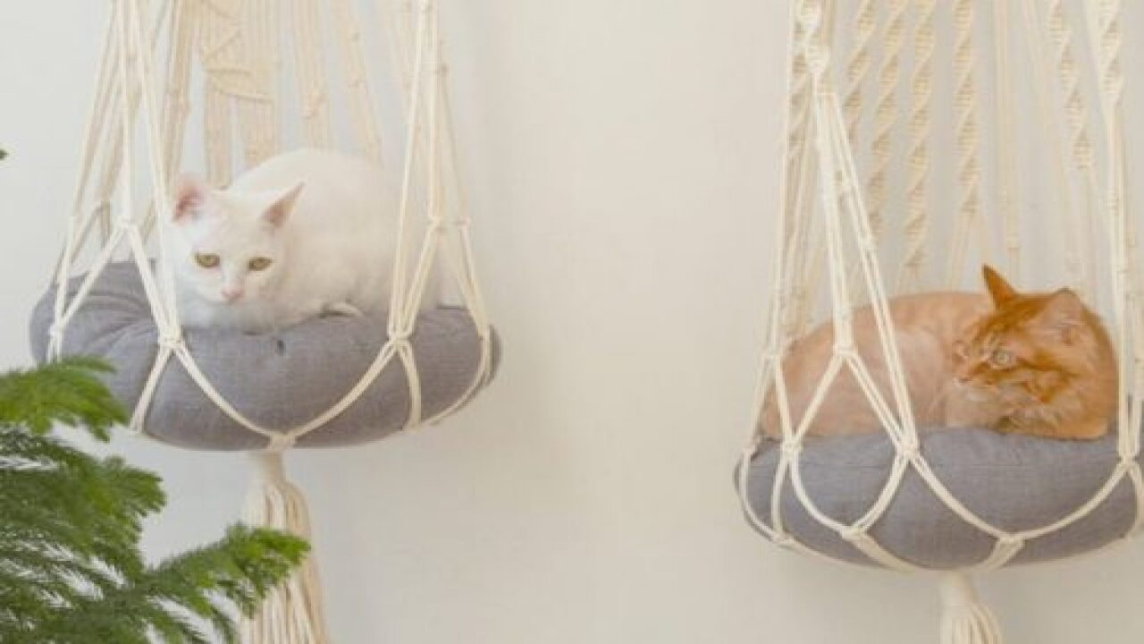Get Your Cat The Macrame Hammock Of Their Dreams