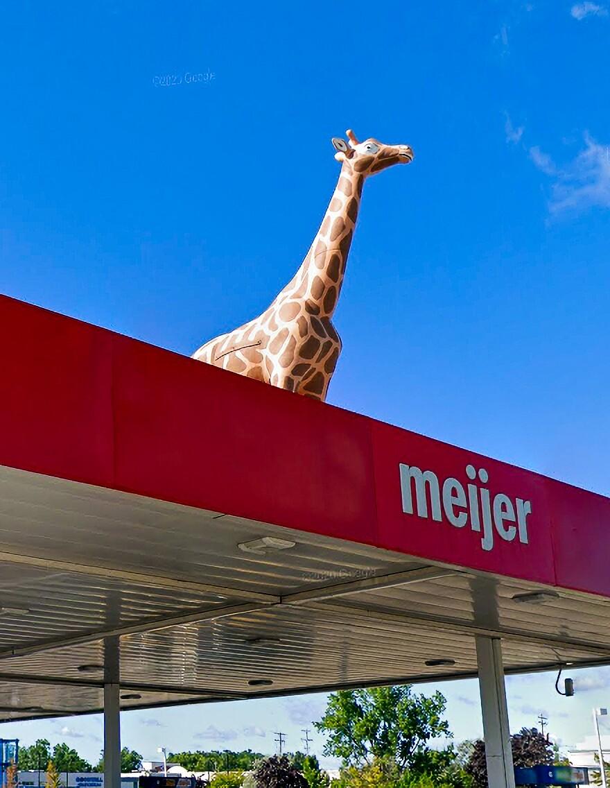 The Meijer giraffe is back