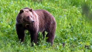 CPW warns of black bear in Green Mountain Falls