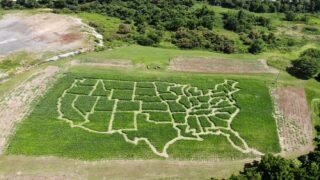 This Virginia Farm Has A Corn Maze Shaped Like The U.S.