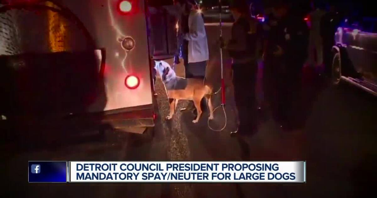 Mandatory spay/neuter of large dogs in Detroit proposed