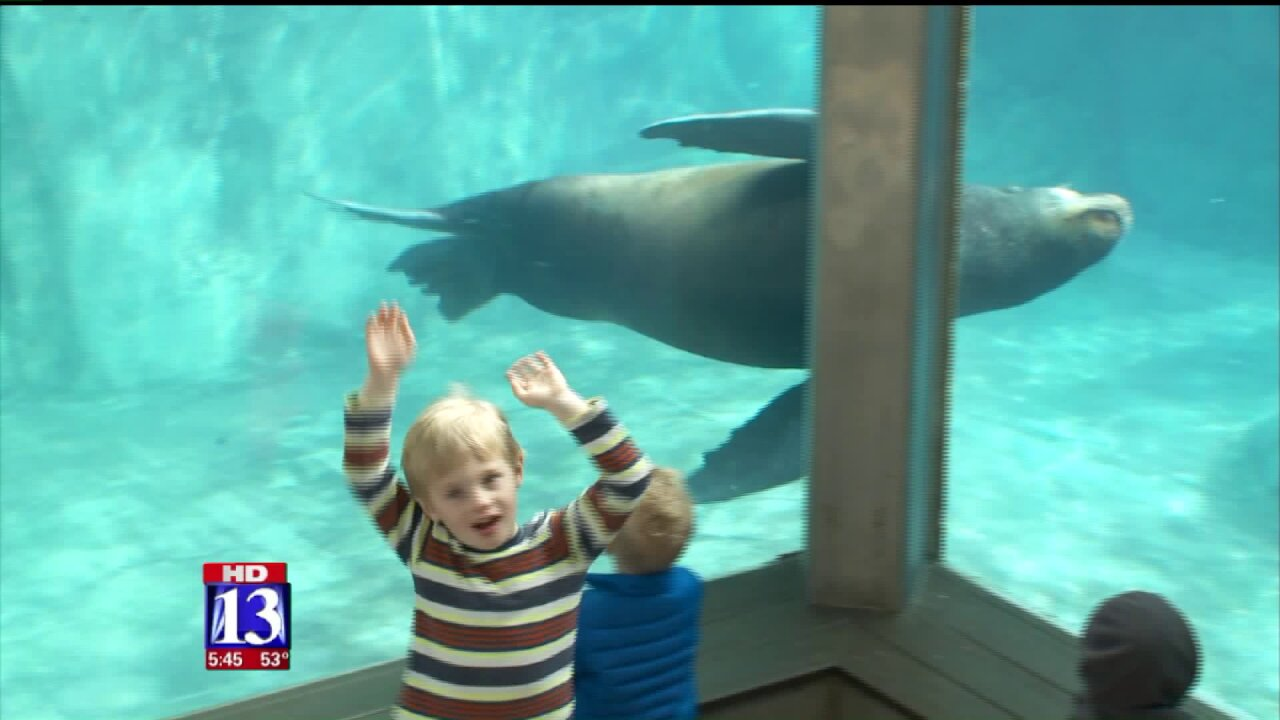 A new star arrives in Salt Lake City: meet Diego the sealion