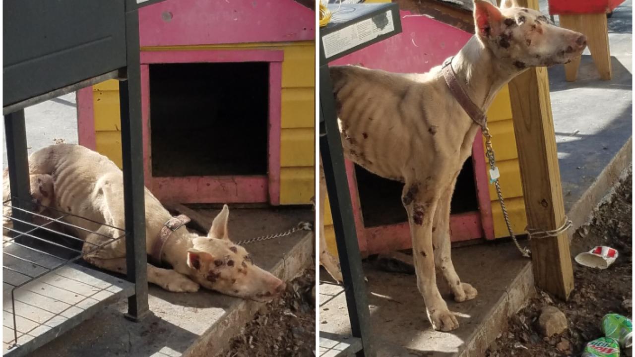 Animal abuse Reiley Township