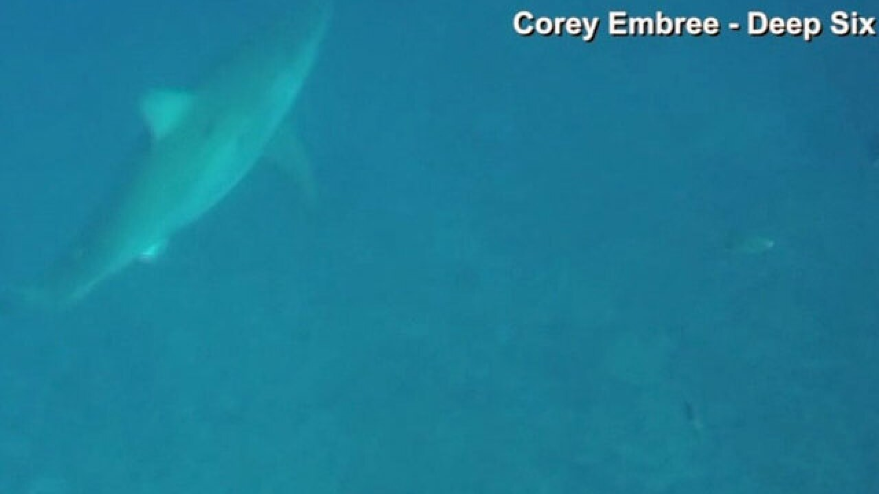 Experts seeing uptick in great white sightings