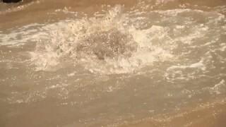 2019-06-21 Nogales IOI-brown swirl.jpg