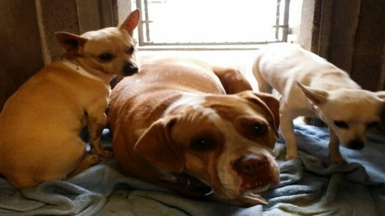 Stray dogs need to find furr-ever home, together