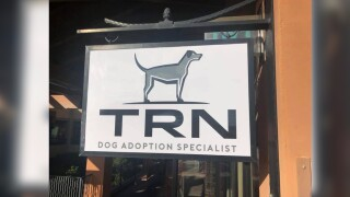 Tucson Rescue Now adoption center