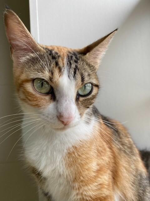 GMA Pet of the Week: Fridge