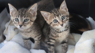 Northeast Ohio SPCA rescued kittens