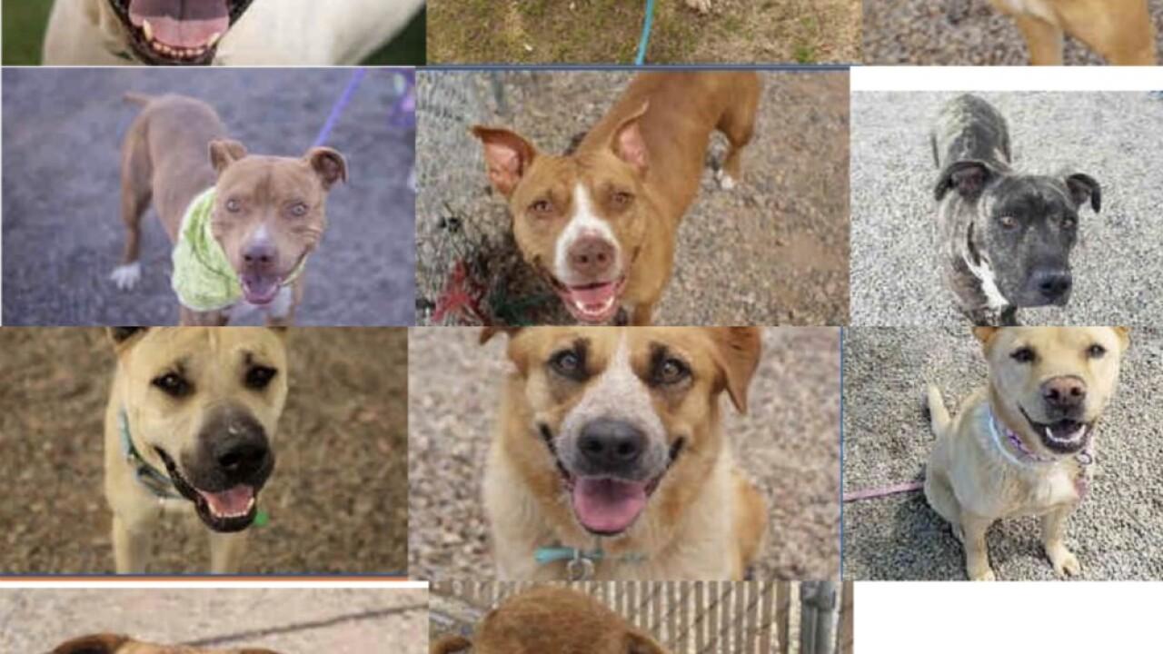 KNXV MCACC Distemper Dogs.jpg