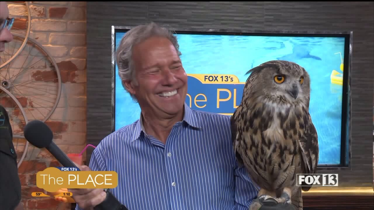 A live demonstration with an eagle-owl from Earth Wings