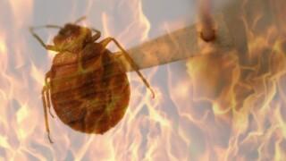 Bed Bugs Fire.jpg