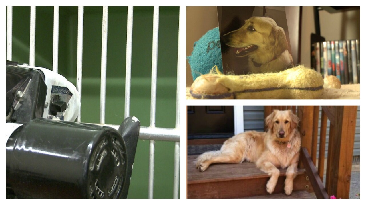 Petco says 'no heat' used in cage dryer that family claims killed golden retriever