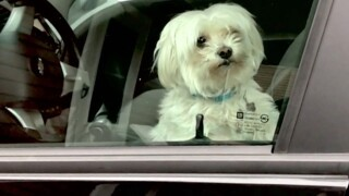 Would you save a pet in a hot car? Kentucky might make it legal for you to do so