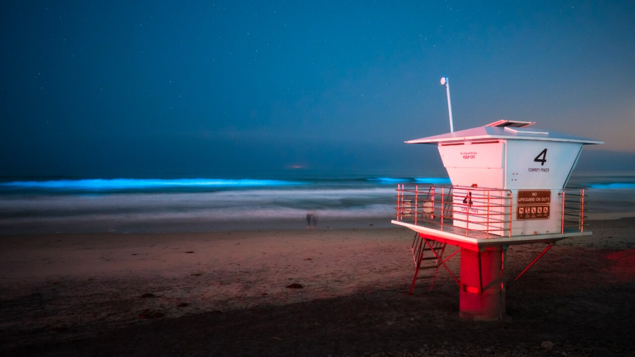 Bioluminescent waters return to San Diego