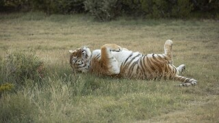 Tiger King park vacated, animals left behind rescued, property for sale
