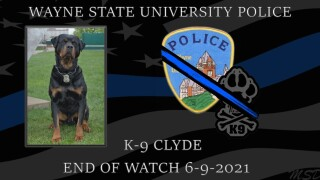 K9 Clyde of the Wayne State University Police