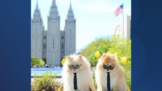 Temple Square Dogs.jpg