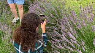 Cedar Ridge Trails Lavender